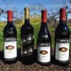 Rượu vang Coppola Rosso & Bianco