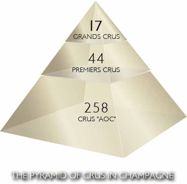 Grand cruise thuật ngữ gì trong rượu vang Pháp