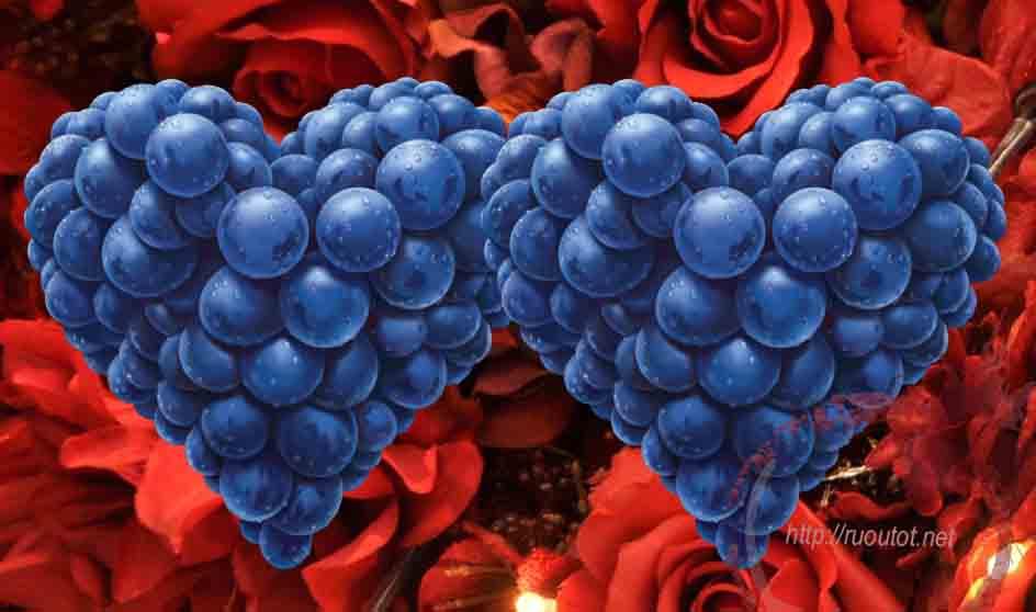 Rượu Pinot Noir